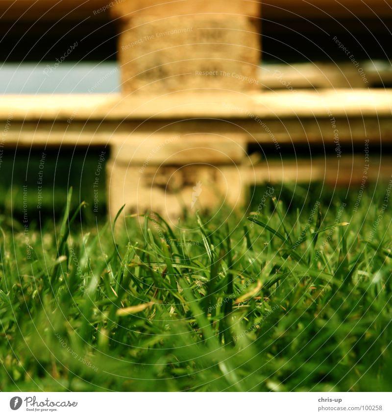 Palette II Natur grün Wiese Holz Industrie Güterverkehr & Logistik Rasen Lastwagen Zeichen Handwerk Euro Gewicht Nagel Spedition Paletten Norm