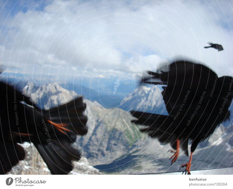 Simultanflucht Himmel weiß grün blau Winter schwarz Wolken Tier Ferne kalt Schnee Berge u. Gebirge Freiheit Stein Luft Vogel