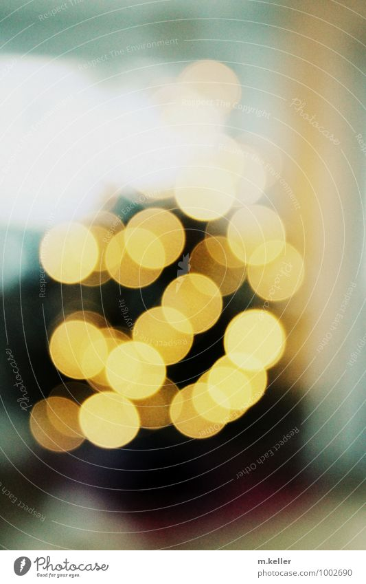 Weihnachten Weihnachten & Advent ruhig Freude Wohnung Warmherzigkeit Tradition Vorfreude Vorsicht friedlich Gastfreundschaft