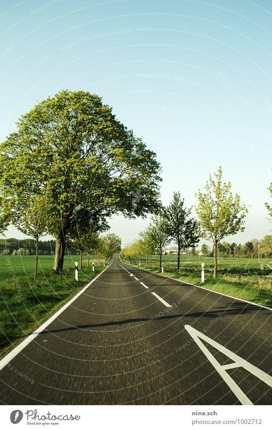 Landstraße / Geschwindigkeit / Frühling Natur Ferien & Urlaub & Reisen Sommer Sonne Baum Landschaft Ferne Straße Wiese Gras Lifestyle Feld Häusliches Leben