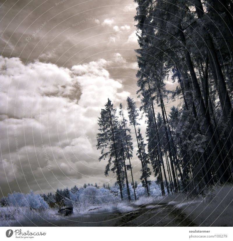 one step further... Infrarotaufnahme weiß Farbinfrarot Personenzug schwarz Wolken Gras Wegrand Wiese Holzmehl Wood-Effekt traumhaft außergewöhnlich träumen Zaun
