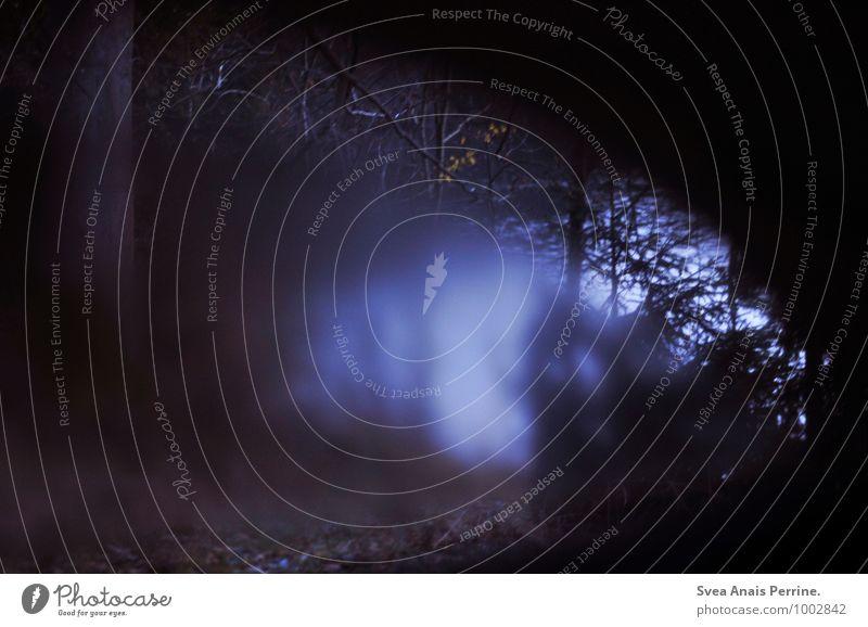 der Seelensee. Umwelt Natur Wasser Herbst Baum Blatt Wald Autofenster beobachten träumen Traurigkeit dunkel gruselig kalt Gefühle Stimmung Heimweh Fernweh