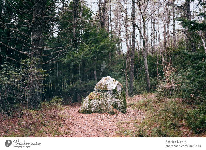 Retreat (3) Wellness harmonisch Wohlgefühl Zufriedenheit Sinnesorgane Erholung Freizeit & Hobby Ferien & Urlaub & Reisen Ausflug Abenteuer Ferne Freiheit Umwelt