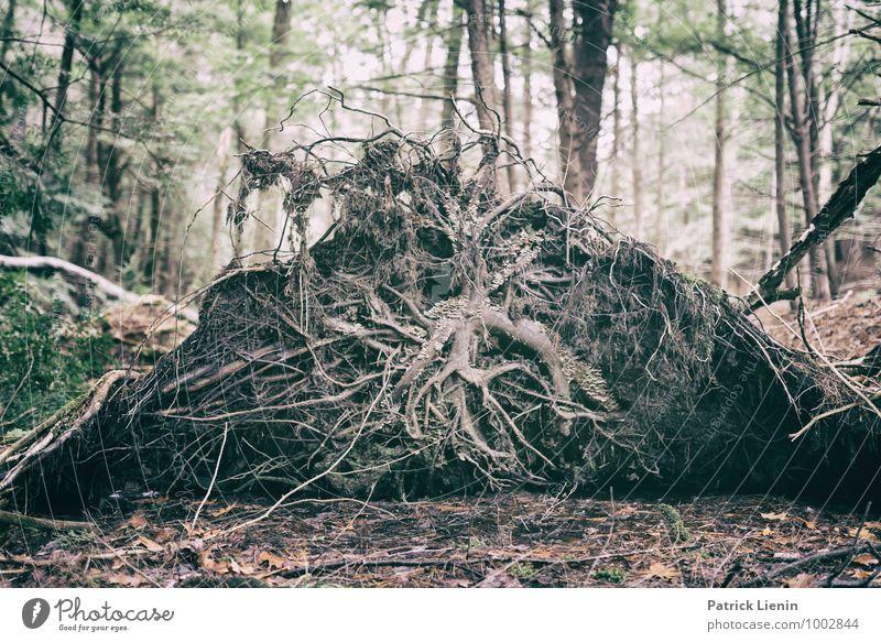 Retreat (5) Wellness harmonisch Wohlgefühl Zufriedenheit Sinnesorgane Erholung ruhig Meditation Freizeit & Hobby Umwelt Natur Landschaft Urelemente Erde Pflanze
