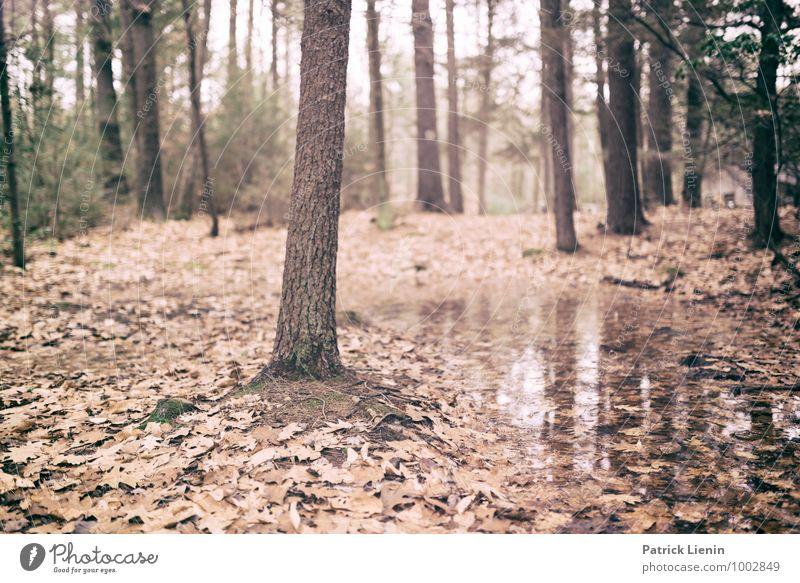 Retreat (4) Natur Pflanze Wasser Baum Erholung Landschaft ruhig Ferne Wald Umwelt Leben Tourismus Zufriedenheit Wetter Erde Ausflug