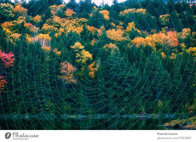 Nordischer Wald Natur Ferien & Urlaub & Reisen Pflanze Baum Erholung Landschaft Berge u. Gebirge Umwelt Leben Gesundheit Freiheit Horizont Zufriedenheit Wetter