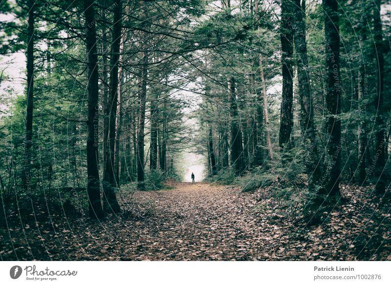 Waldtunnel Mensch Natur Ferien & Urlaub & Reisen Pflanze Baum Erholung Landschaft ruhig Umwelt Leben Herbst Freiheit Zufriedenheit Wetter wandern