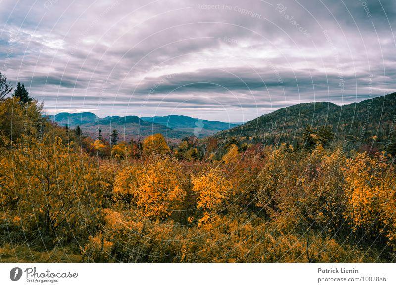 Herbst in New Hampshire Himmel Natur Ferien & Urlaub & Reisen Pflanze Sommer Baum Erholung Landschaft Wolken Ferne Wald Berge u. Gebirge Umwelt Freiheit