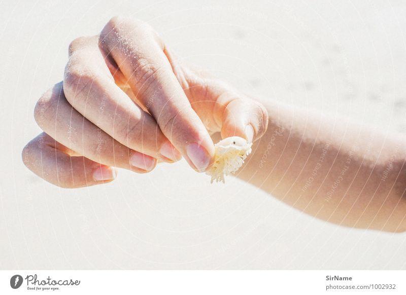 297 [meerestier] Ferien & Urlaub & Reisen Jugendliche Hand Tier Strand Leben Wege & Pfade Freizeit & Hobby Wildtier Kindheit beobachten niedlich Finger einfach