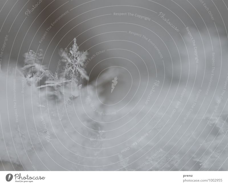 Schnee frisch Umwelt Natur Winter Wetter Schneefall schön grau Schneeflocke Schneekristall Farbfoto Außenaufnahme Nahaufnahme Makroaufnahme Menschenleer
