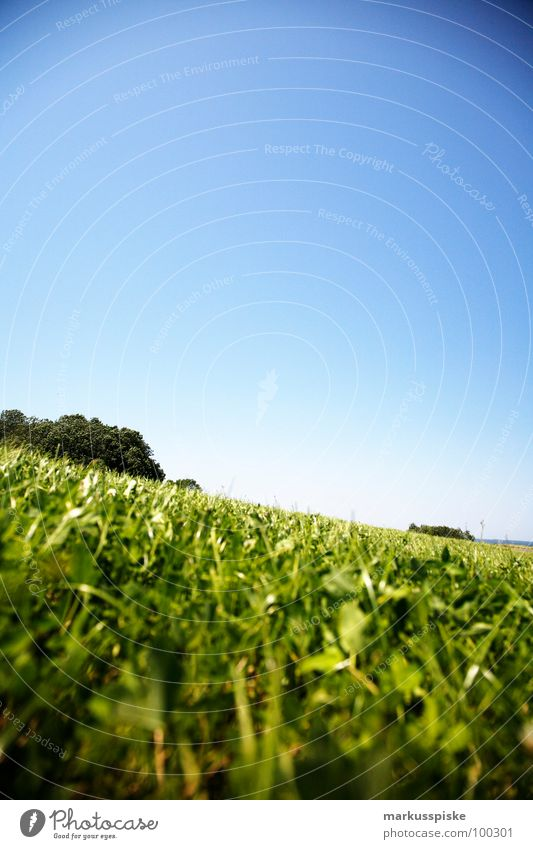 sommer wiese Himmel grün Sonne Sommer Ferne Landschaft Wiese Gras Schönes Wetter Idylle Halm saftig