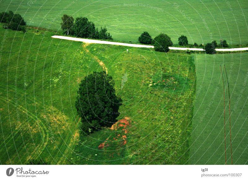der weg ins nichts Schotterweg Baum Feld Ziel Sommer Jahreszeiten Frühling springen Wiese flach Muster grün Vogelperspektive unten Platz Ackerboden Futter