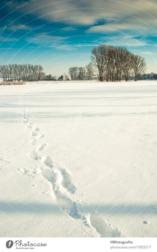 Spuren Natur weiß Sonne Landschaft Winter kalt Schnee Eis wandern Frost Schneespur