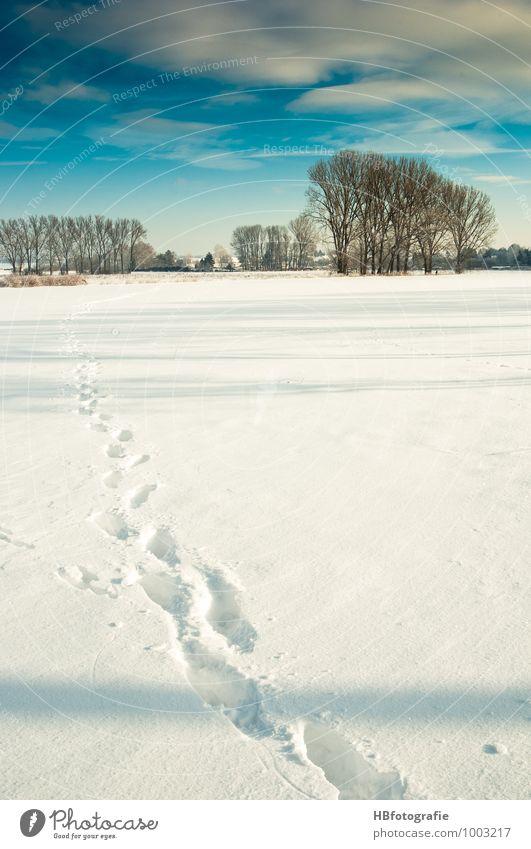 Spuren Winter Schnee wandern Natur Landschaft Sonne Sonnenlicht Eis Frost kalt weiß Schneespur Farbfoto Außenaufnahme Morgen Tag Licht Schatten Totale