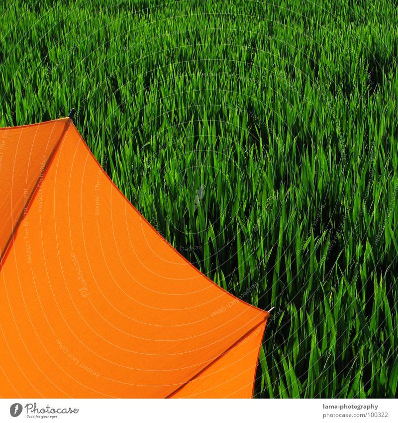 Angeschnitten Cloppenburg Regenschirm Sonnenschirm Unwetter Wolken Gras Halm Wiese Feld grün Frühling Sommer Erholung Sonnenbad Blumenwiese Umwelt sommerlich