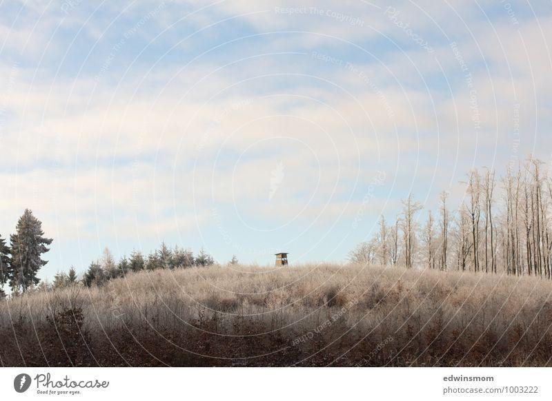 Draußen. Winter. Natur. Durchatmen. Himmel Ferien & Urlaub & Reisen weiß Erholung ruhig Wolken Ferne schwarz Wald kalt Berge u. Gebirge Schnee natürlich hell