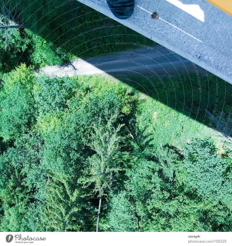 Brücke springen Luft Baum Wald Rand Baumkrone Tanne Nadelwald Wiese Lärche Beton Asphalt gefährlich Risiko gewagt Angst Höhenangst Flugangst Panik oben hoch