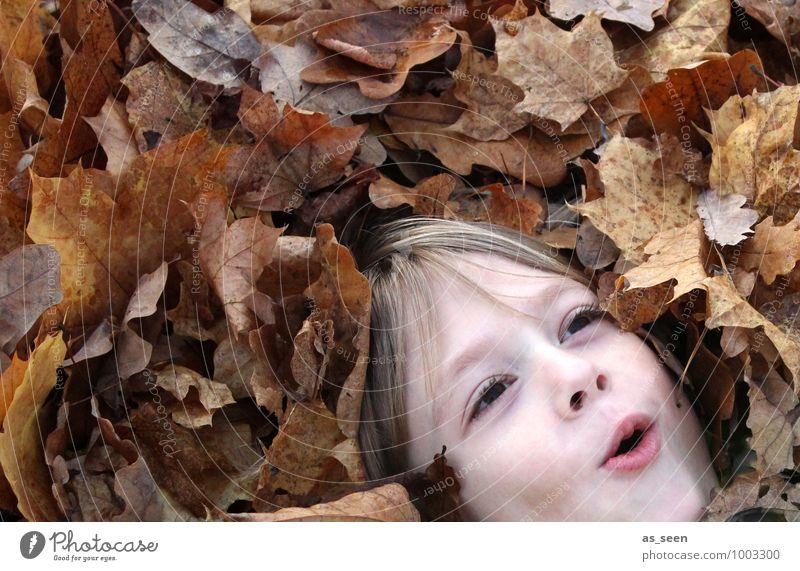 Blätterbad Junge Kindheit Leben Gesicht 1 Mensch 8-13 Jahre Umwelt Natur Pflanze Herbst Blatt Laubwald Herbstlaub Haare & Frisuren lachen Spielen