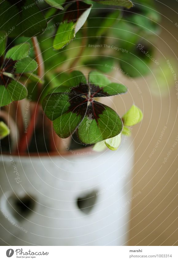 Glück für 2015 Pflanze grün Blatt Stimmung Silvester u. Neujahr Grünpflanze Klee Kleeblatt Glücksbringer