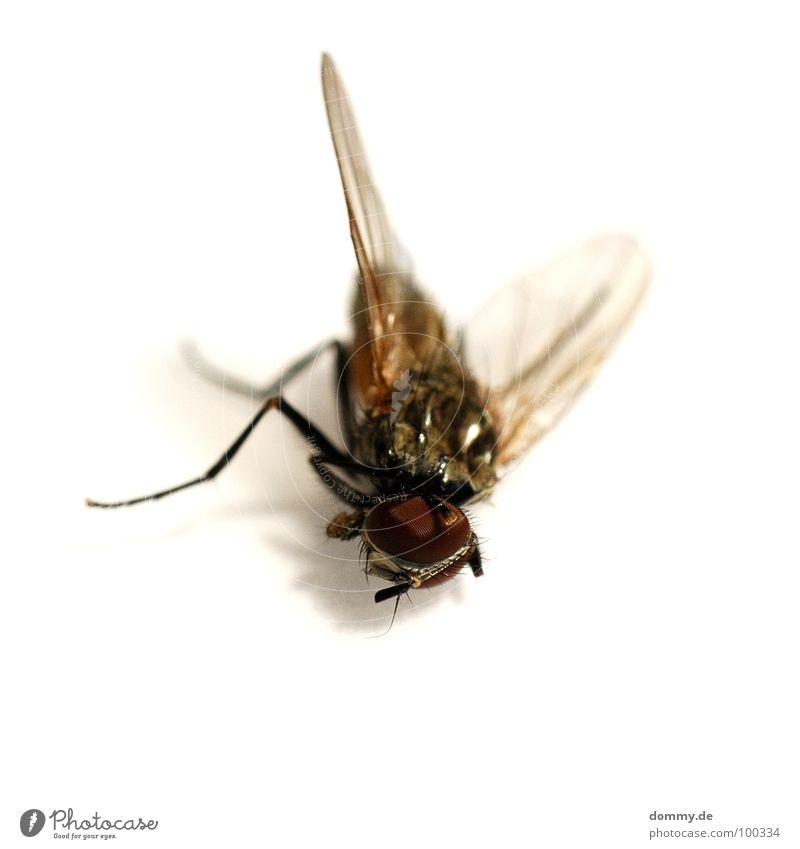 GAME OVER Makroaufnahme klein dünn Facettenauge Tod kaputt Plagegeist Nahaufnahme Fliege fly fliegen Flügel Schatten Leben Beine Auge facette game over