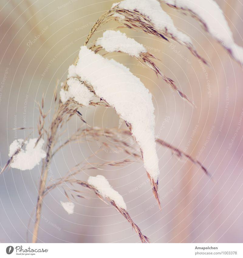 ::15-7:: (111 - Schnapszahl :D ) Natur Pflanze Erholung Landschaft Tier Winter Wald Wiese Schnee Küste See Schneefall Tourismus Wetter Feld Eis