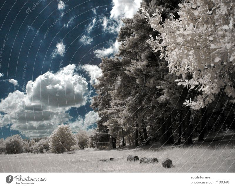 Am Rande... Himmel weiß Baum blau rot schwarz Wolken Wald Wiese Gras träumen Wege & Pfade Denken lustig Spaziergang Spuren