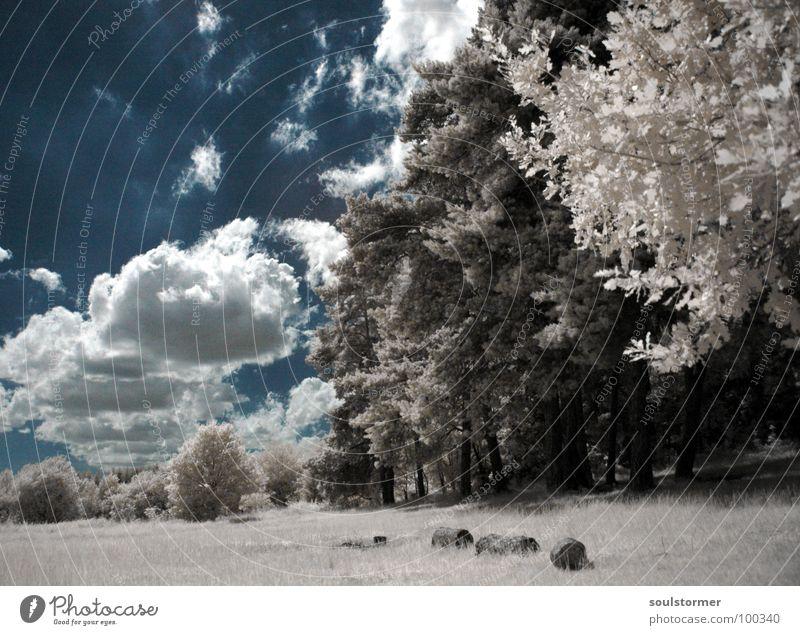 Am Rande... Infrarotaufnahme weiß Farbinfrarot Personenzug schwarz Wolken Gras Wegrand Wiese Holzmehl Wood-Effekt traumhaft außergewöhnlich träumen Zaun Baum