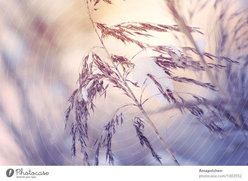 ::15-3:: Umwelt Natur Landschaft Sonnenaufgang Sonnenuntergang Winter Klima Wetter Eis Frost Schnee Schneefall Pflanze Sträucher Farn Wildpflanze Garten Park