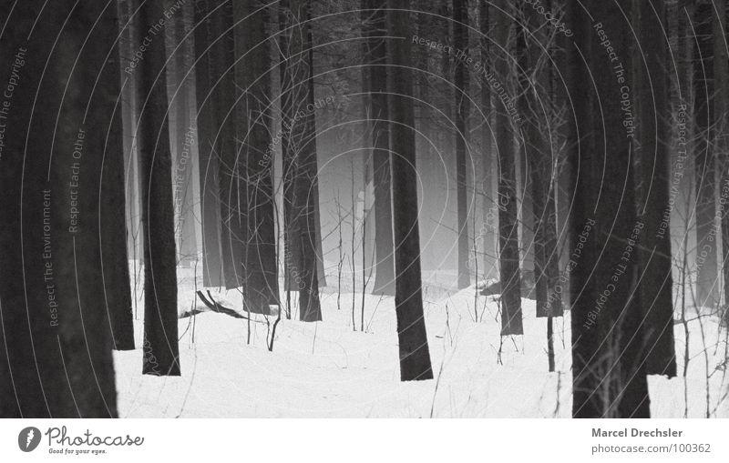 Nebelwald 2 Baum schwarz gruselig grauenvoll Geister u. Gespenster weiß Sträucher Wald Tanne Fichte ruhig Baumrinde Erzgebirge Winter Angst Panik Spuk Schnee