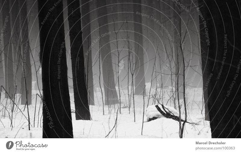 Nebelwald 1 Baum schwarz gruselig grauenvoll Geister u. Gespenster weiß Sträucher Wald Tanne Fichte ruhig Baumrinde Erzgebirge Angst Panik Winter Spuk Schnee