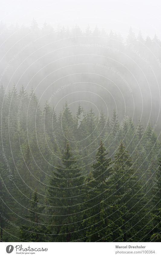 Sommer im Erzgebirge Baum dunkel gruselig grauenvoll Nebel Geister u. Gespenster weiß Sträucher Wald Tanne Fichte ruhig Baumrinde Nieselregen Rauschen Verhext