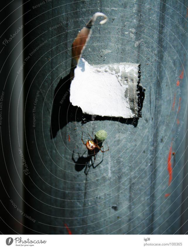 mein schatzzz Spinne fixieren Befestigung klein Diebstahl Erfolg Verlierer Papier grau hängen wichtig Ernährung Fressen Insekt vertikal Muster wellig kaputt