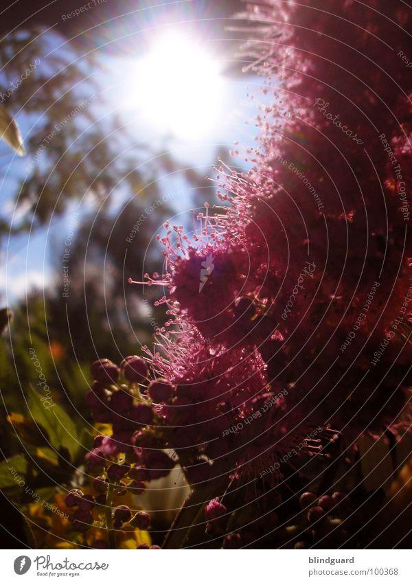 Light In The Garden schön Pflanze Sonne Sommer Freude Leben Blüte Garten Park orange Regen rosa glänzend Wassertropfen Romantik geheimnisvoll