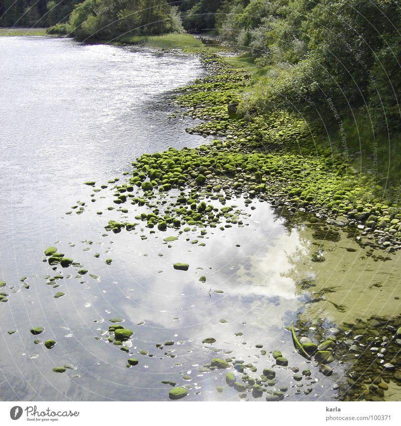 stille Wasser... Baum grün ruhig Wolken Stein Fluss Kanada Bach Algen