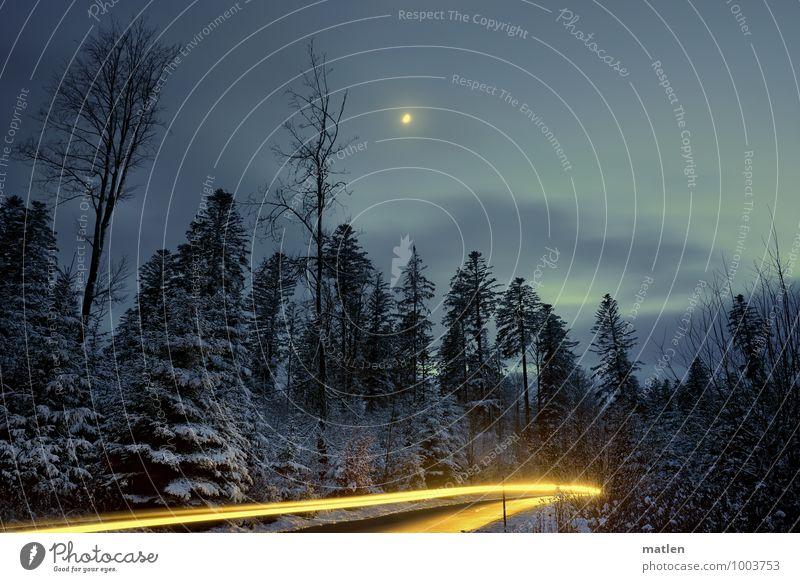 Aussergewöhnlich I Winternachtstraum Natur Landschaft Pflanze Himmel Wolken Nachthimmel Mond Wetter Schönes Wetter Eis Frost Schnee Baum Wald Menschenleer