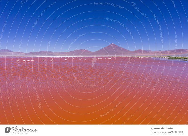Laguna Colorada, Roter See, Andengebirge, Bolivien Ferien & Urlaub & Reisen Tourismus Ausflug Abenteuer Freiheit Sightseeing Kreuzfahrt Berge u. Gebirge wandern