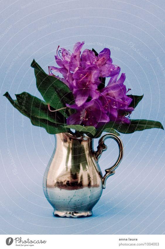 blumenstillleben Pflanze Blume Blatt Blüte Grünpflanze Dekoration & Verzierung Blumenstrauß Kitsch Krimskrams Duft verblüht Wachstum schön blau silber