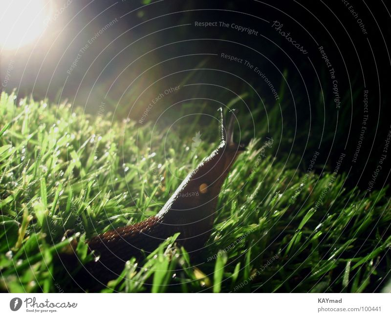 giraffe oder schnecke? ruhig Wiese Gras Garten Freiheit nass Gelassenheit Neugier Schnecke Interesse zeitlos
