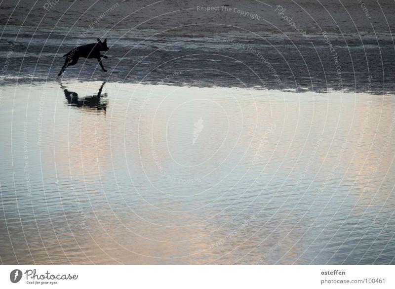 gespiegelter hund Travemünde Tier Hund schwarz 100 Meter Lauf Strukturen & Formen Strand Reflexion & Spiegelung Meer Monochrom einfarbig Ebbe Erholung Säugetier