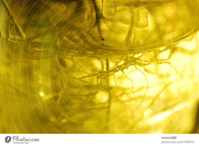 Yellow Braindeath Natur Pflanze Farbe gelb Leben lustig außergewöhnlich verrückt Wachstum Elektrizität Frieden Flasche durcheinander Leitung Ekel seltsam