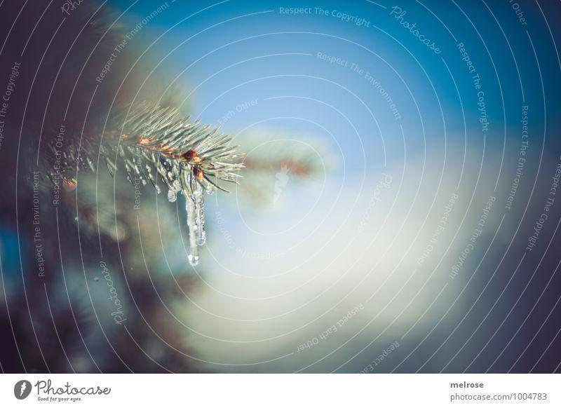 Eiszeit Himmel Natur Ferien & Urlaub & Reisen blau grün weiß Baum Erholung Einsamkeit Winter Wald kalt Umwelt Schnee natürlich braun