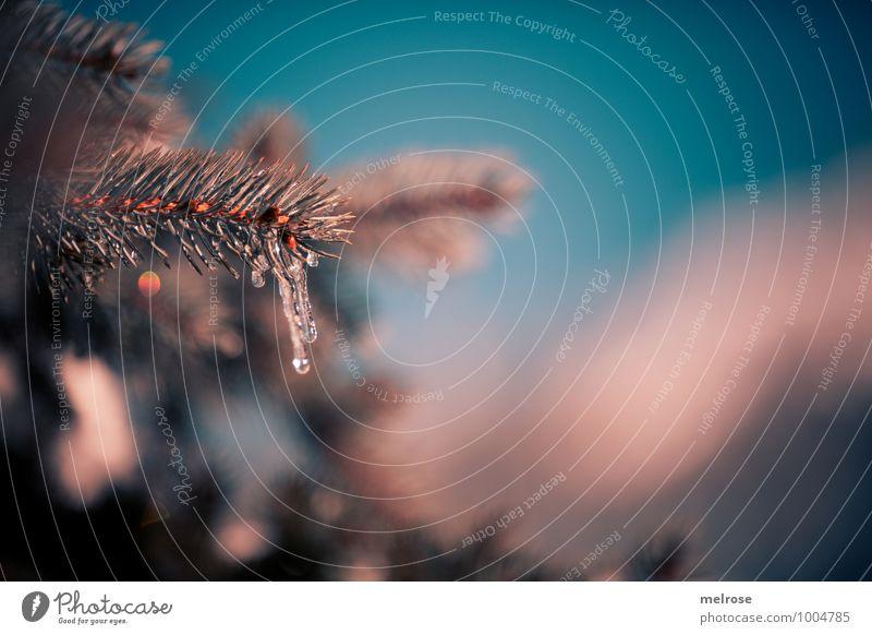 Eiszeit IV Himmel Natur Ferien & Urlaub & Reisen blau grün Baum ruhig Winter Wald kalt Umwelt Schnee braun glänzend Tourismus