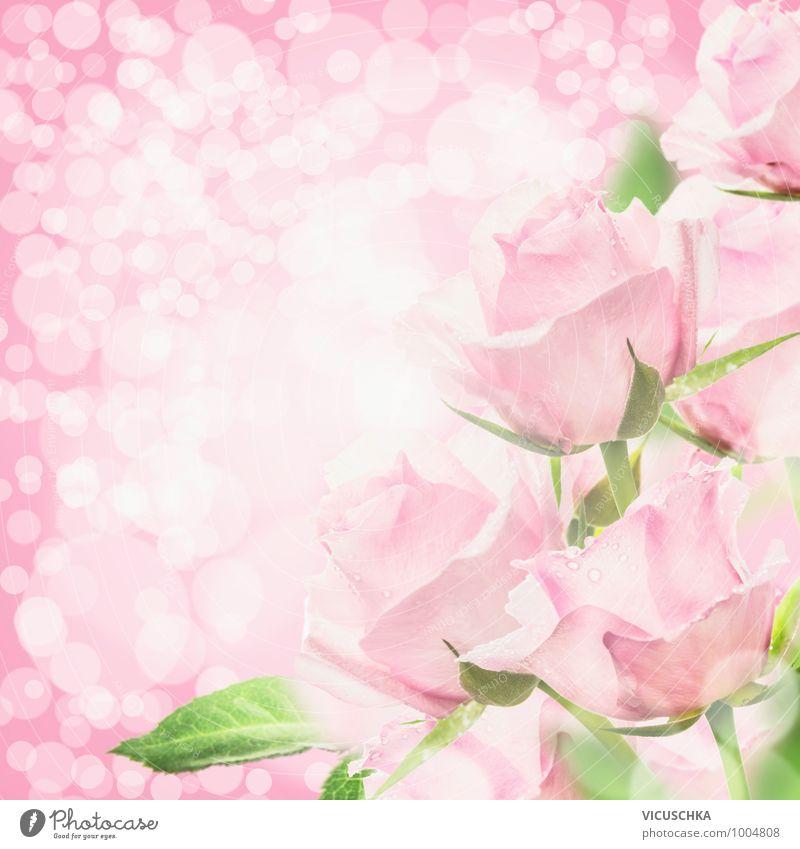 Pink Rosen in Bokeh Licht Natur Pflanze Sommer Blume Liebe Stil Hintergrundbild Feste & Feiern springen rosa Design Geburtstag weich Hochzeit Symbole & Metaphern Rose