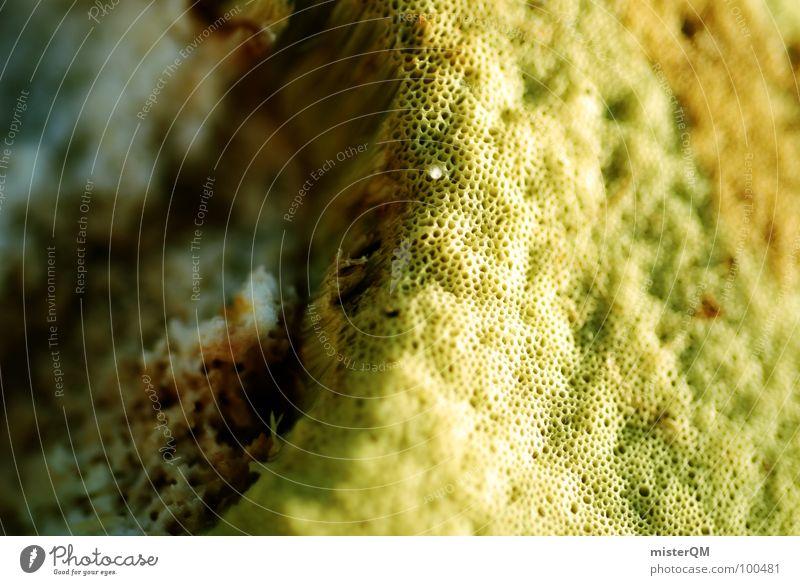 Essbar. Natur grün gelb Lebensmittel braun nah Gastronomie Appetit & Hunger lecker Pilz Am Rand Futter Schwamm essbar Steinpilze