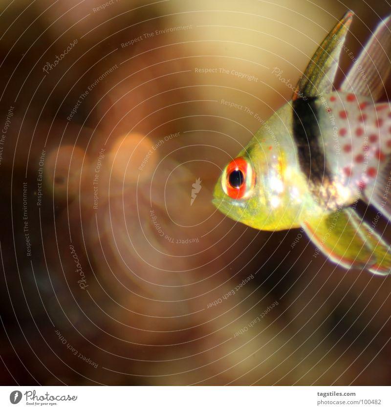 Wenn die ...#*@!/&'#!... Masern fies von hinten kommen Wasser Meer rot schwarz gelb hell Angst glänzend Fisch Punkt unten Panik Schwimmhilfe Tier Illumination Erkenntnis