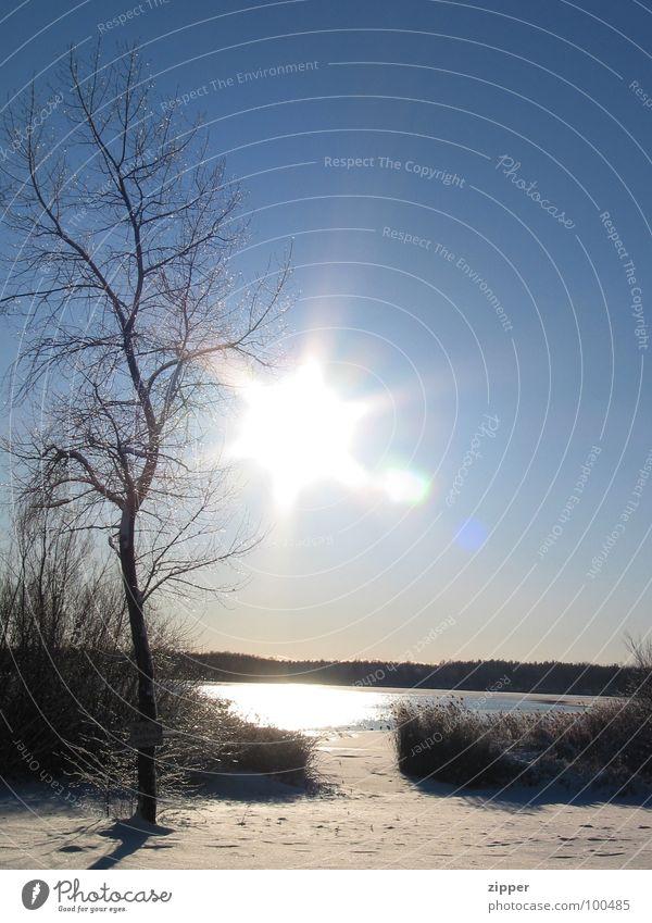 Sonne im Winter Baum kalt Eis Landschaft Himmel Schnee