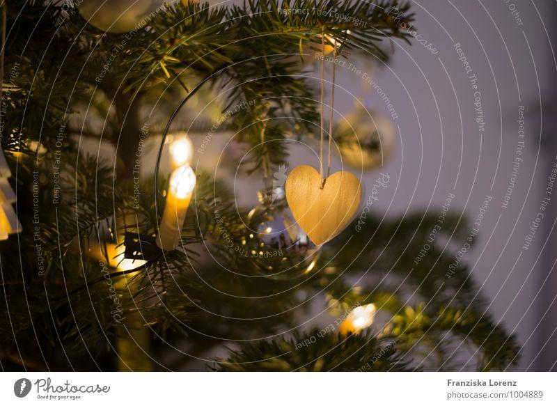 lights Wohnung Dekoration & Verzierung Wohnzimmer Weihnachten & Advent Winter Pflanze Baum Wärme Fröhlichkeit Zufriedenheit Warmherzigkeit Liebe ruhig Neugier