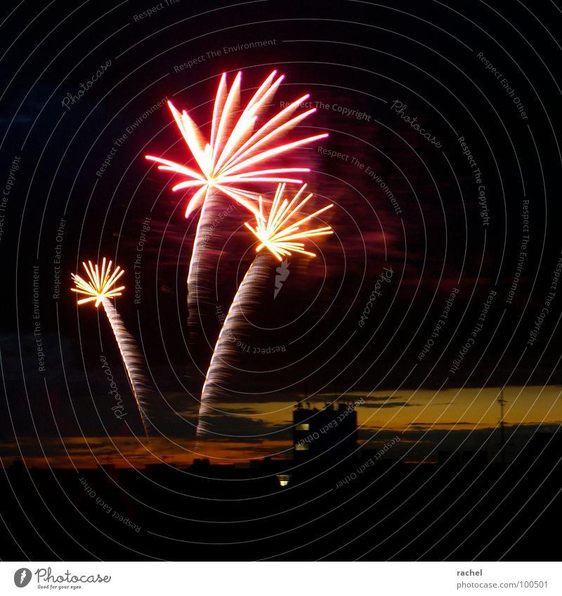 Palmen am Himmel Himmel Freude Lampe dunkel Party Gefühle Glück Feste & Feiern glänzend Horizont Silvester u. Neujahr Konzert Nachthimmel Show Vergänglichkeit fantastisch