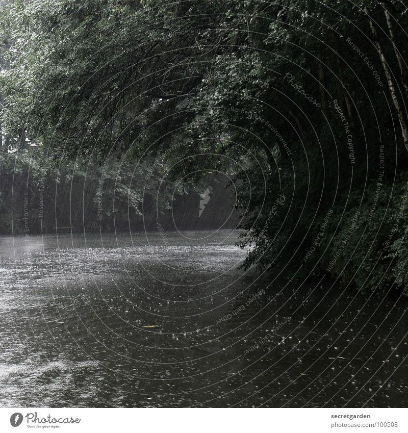 hinter der kurve Natur Wasser Baum Blatt dunkel Gefühle grau Traurigkeit See Regen Wasserfahrzeug Graffiti Stimmung Raum Küste Angst