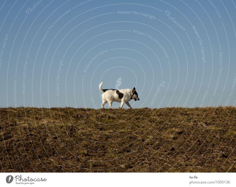 Spaziergang Hund Himmel Natur Einsamkeit Landschaft ruhig Tier Bewegung Wiese klein gehen laufen Schönes Wetter Sicherheit Gelassenheit Vertrauen
